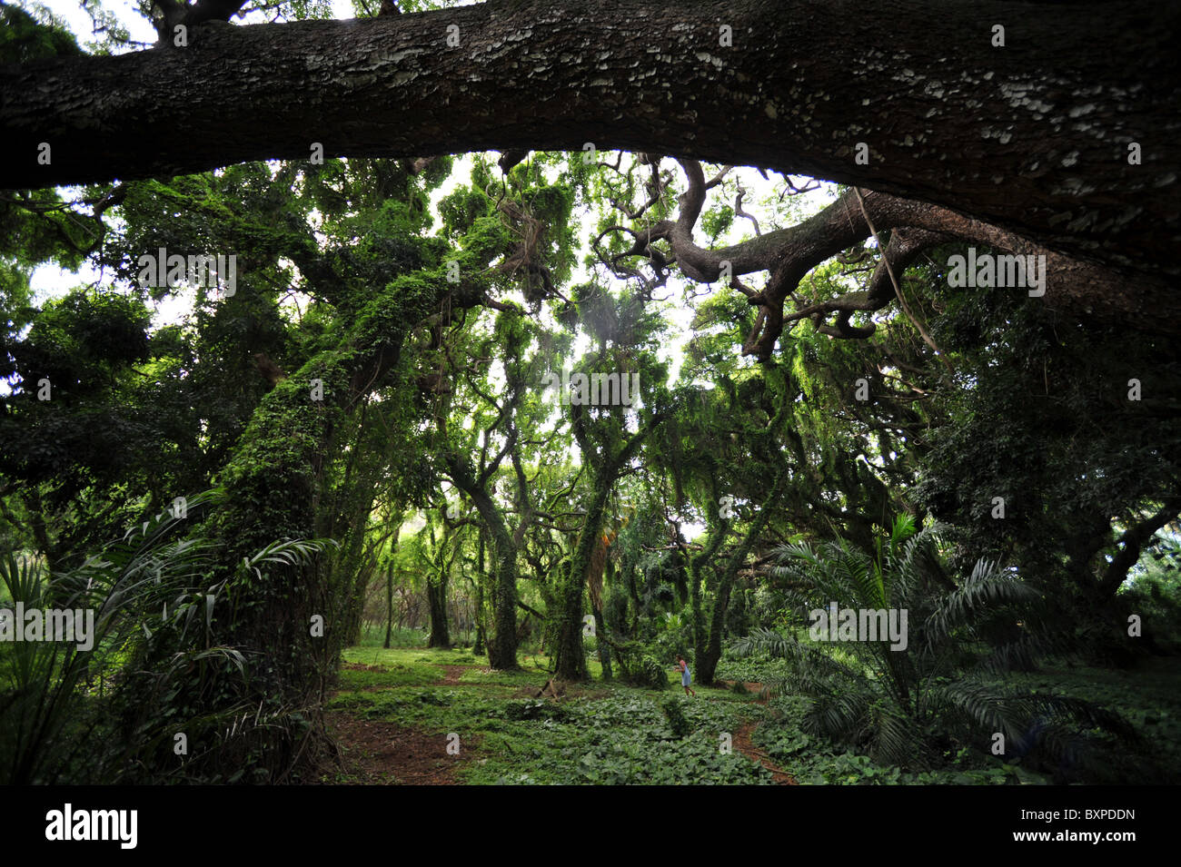 Jungle Photo Stock