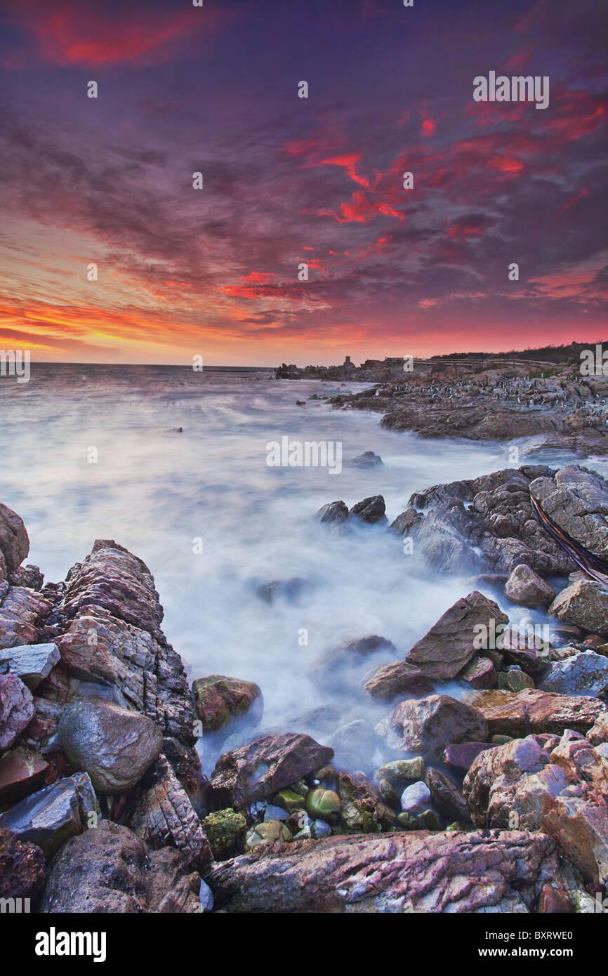Manchot du Cap (Spheniscus demersus) colonie en arrière-plan avec les nuages coucher de soleil glorieux teinté Photo Stock