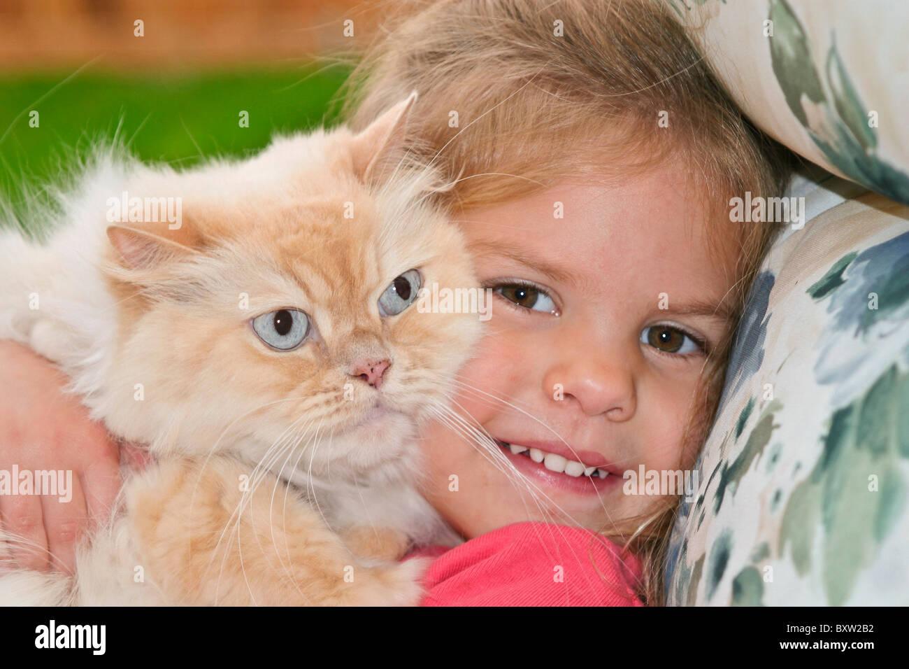 Pre-school girl 3 4 5 ans ans holding Orange Persan Tabby chat domestique domestiqués dans les petits yeux POV MR © Myrleen Pearson Banque D'Images