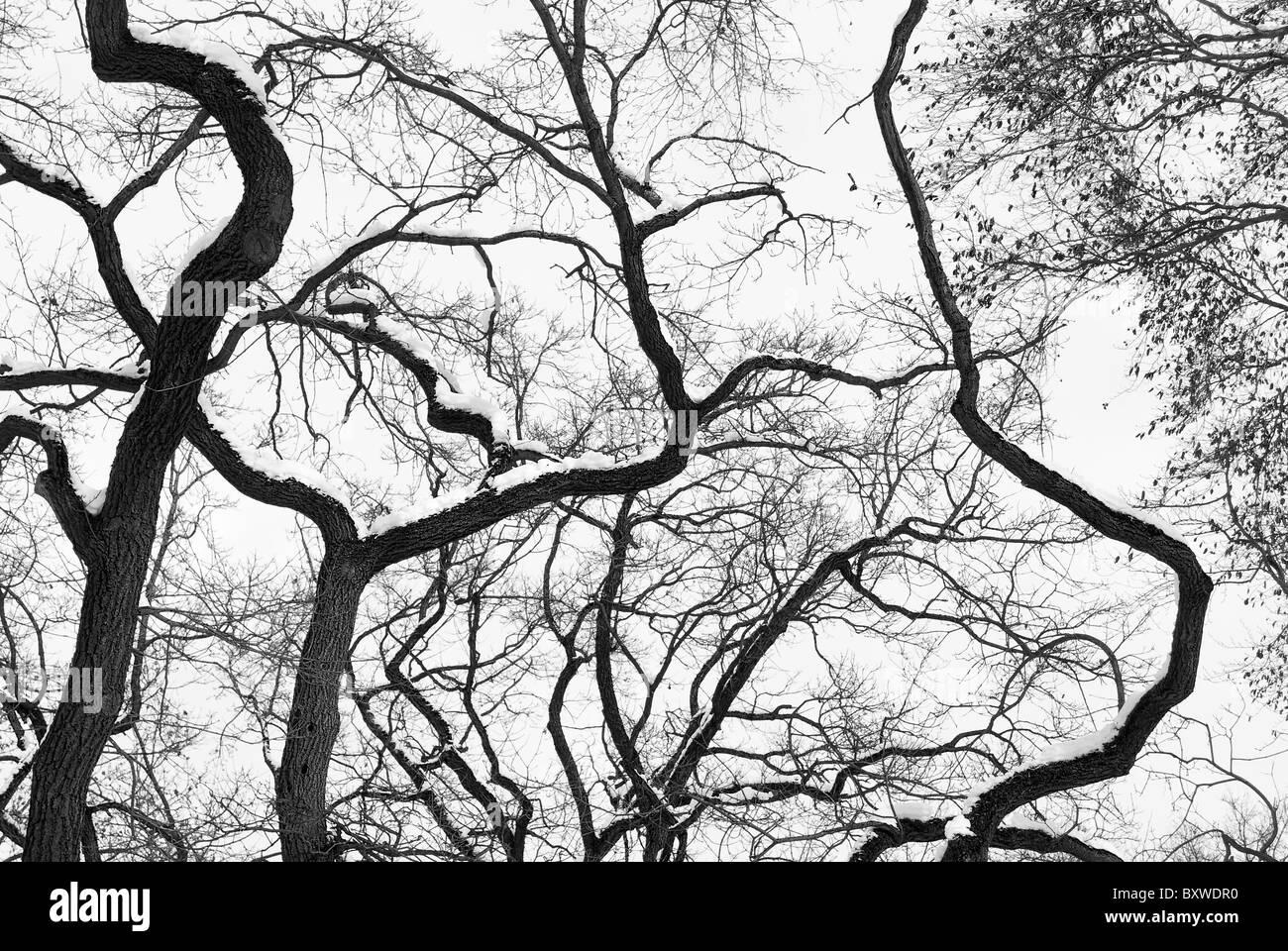 Silhouette de la forêt à haut contraste en noir et blanc Banque D'Images
