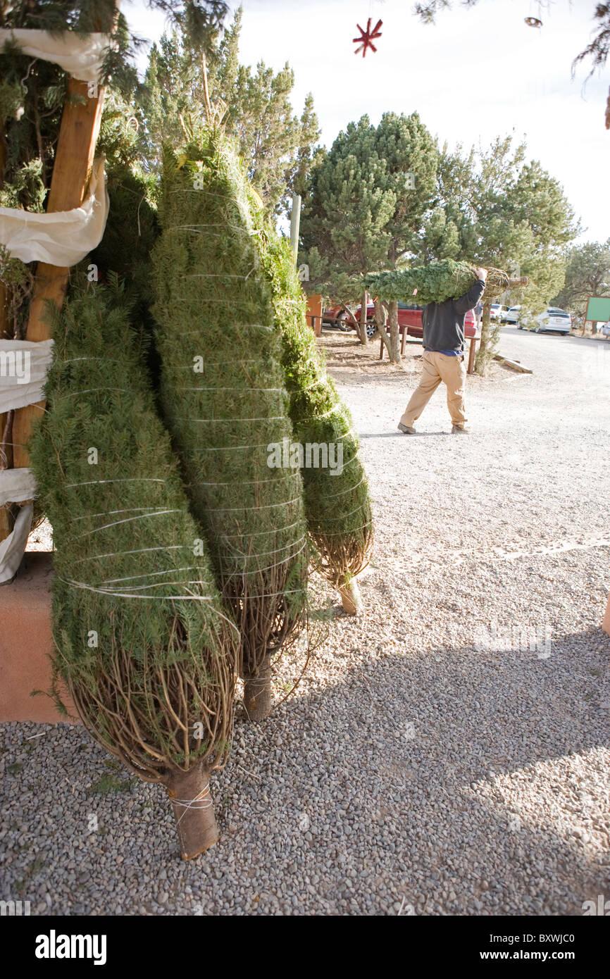 Un homme marche loin d'un arbre de Noël, en face de plusieurs arbres pour la vente, enveloppé, à Photo Stock