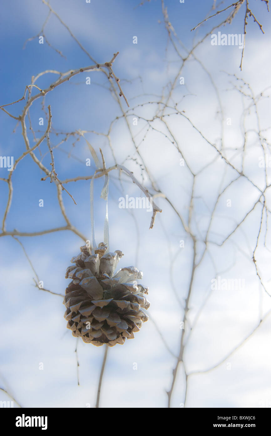 Cône de pin accroché sur arbre, ornement de Noël, d'hiver. Photo Stock