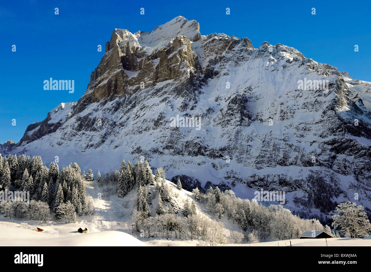 Sur les pistes des Alpes à la recherche vers le Wetterhorn. Alpes Suisses, Suisse Photo Stock