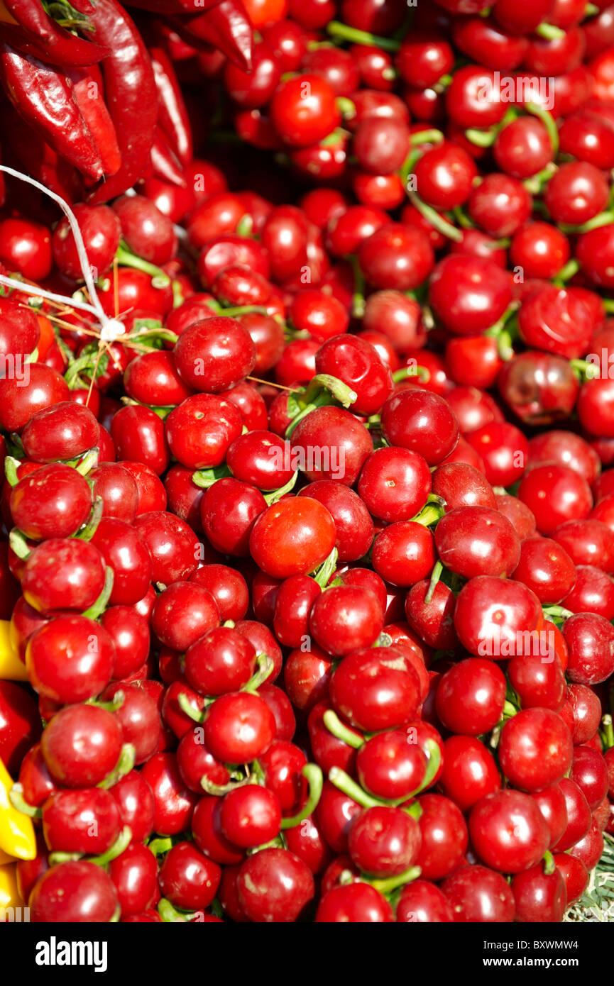Capsicum annuum piment ou paprika hongrois de séchage - Kalocsa Hongrie Photo Stock