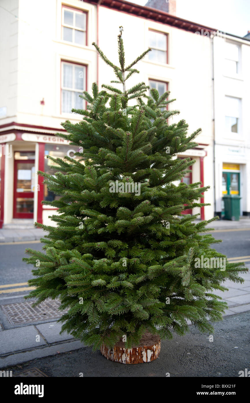 Un arbre de Noël à vendre ,UK Photo Stock