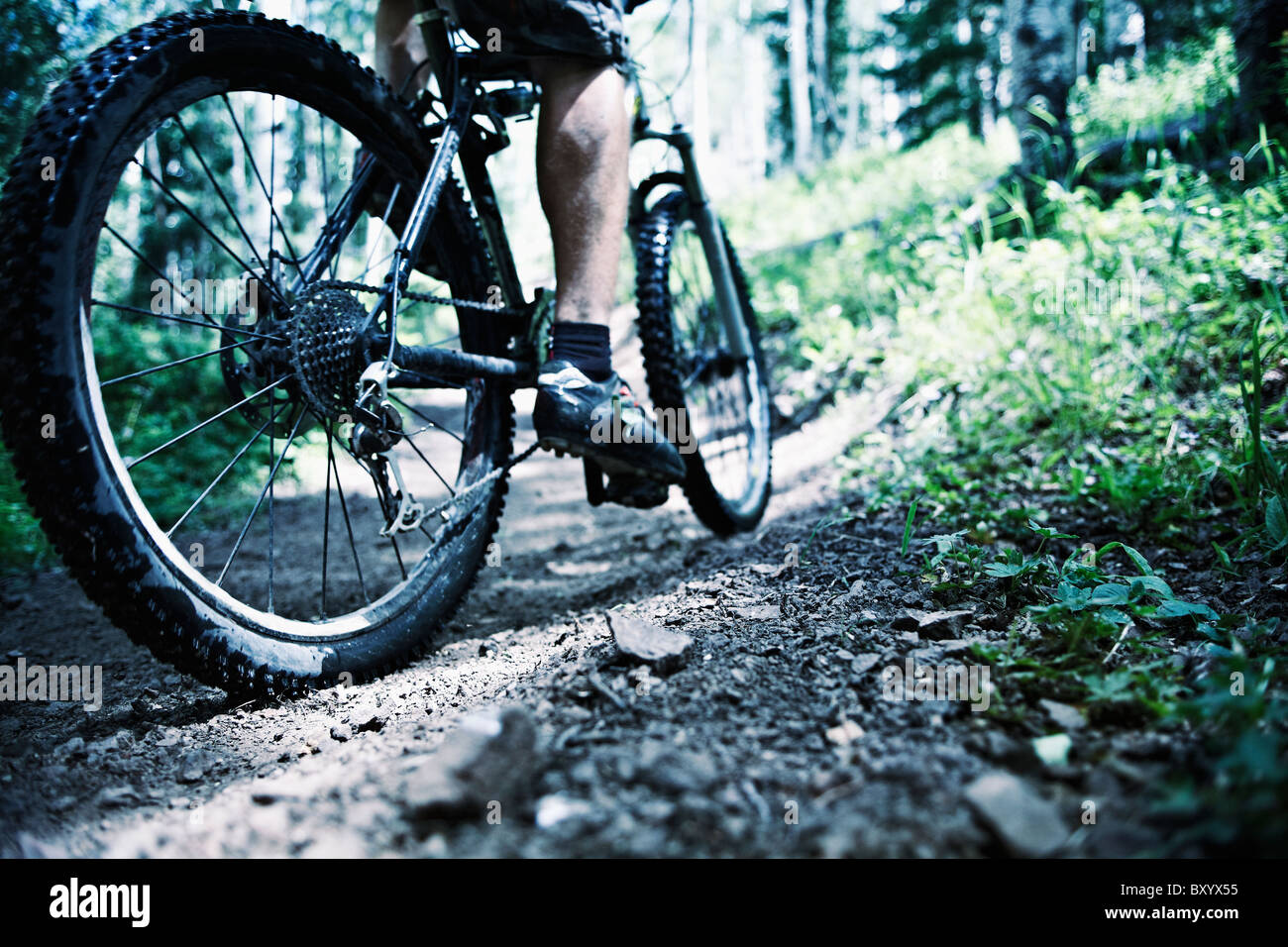 Man mountain biking in forest Photo Stock