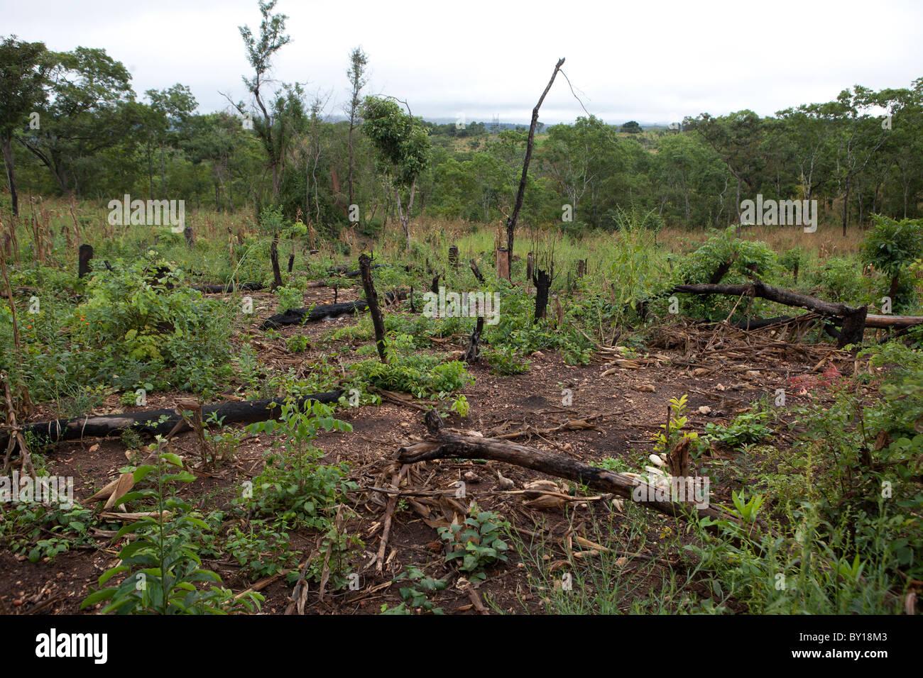 MECATI FORÊT, MOZAMBIQUE, Mai 2010: Expansion de l'agriculture - cette famille couper les arbres Photo Stock