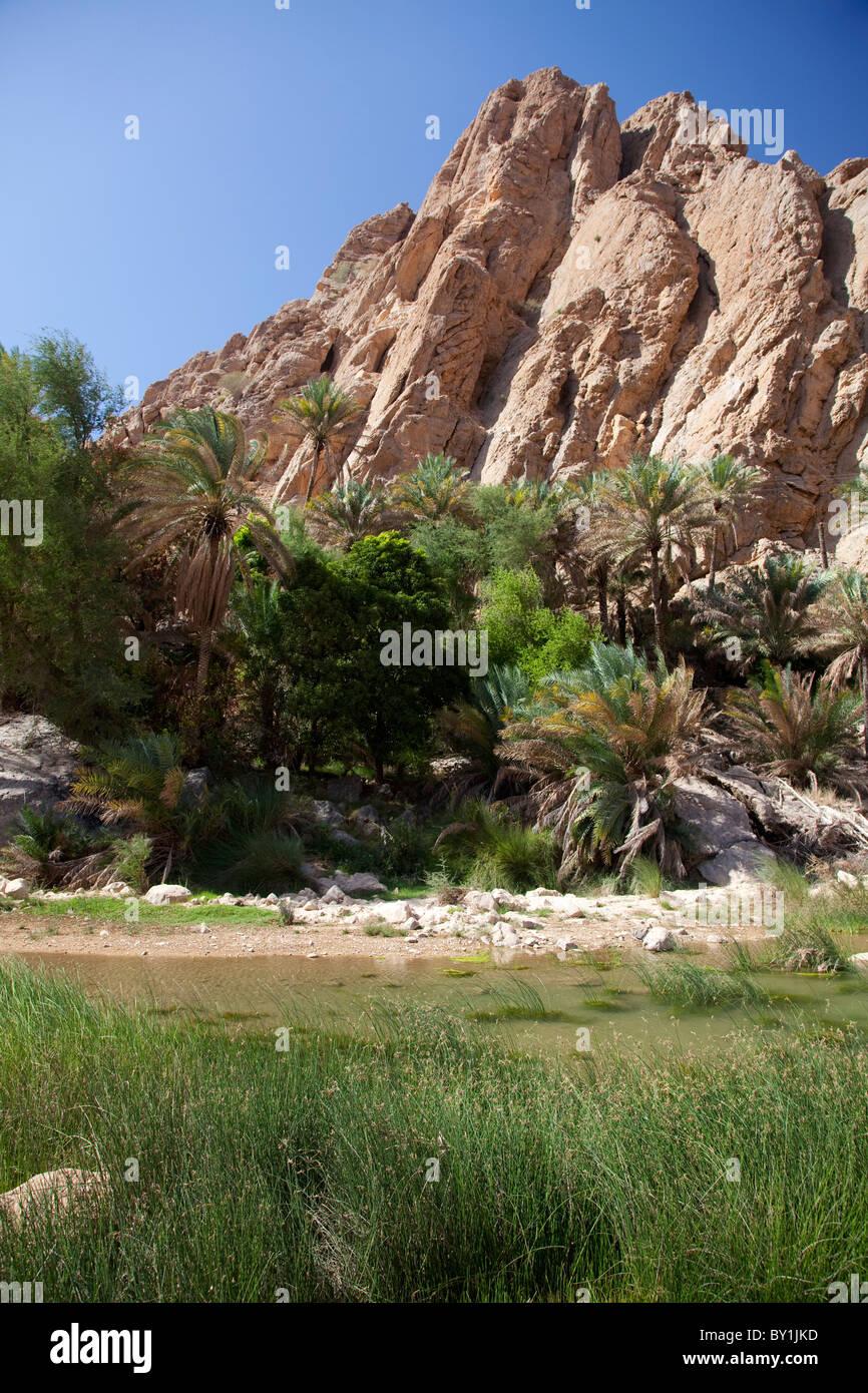 Oman, Wadi Bani Khalid. Les plantes vertes luxuriantes contraste avec les roches arides à ce populaire Wadi. Photo Stock
