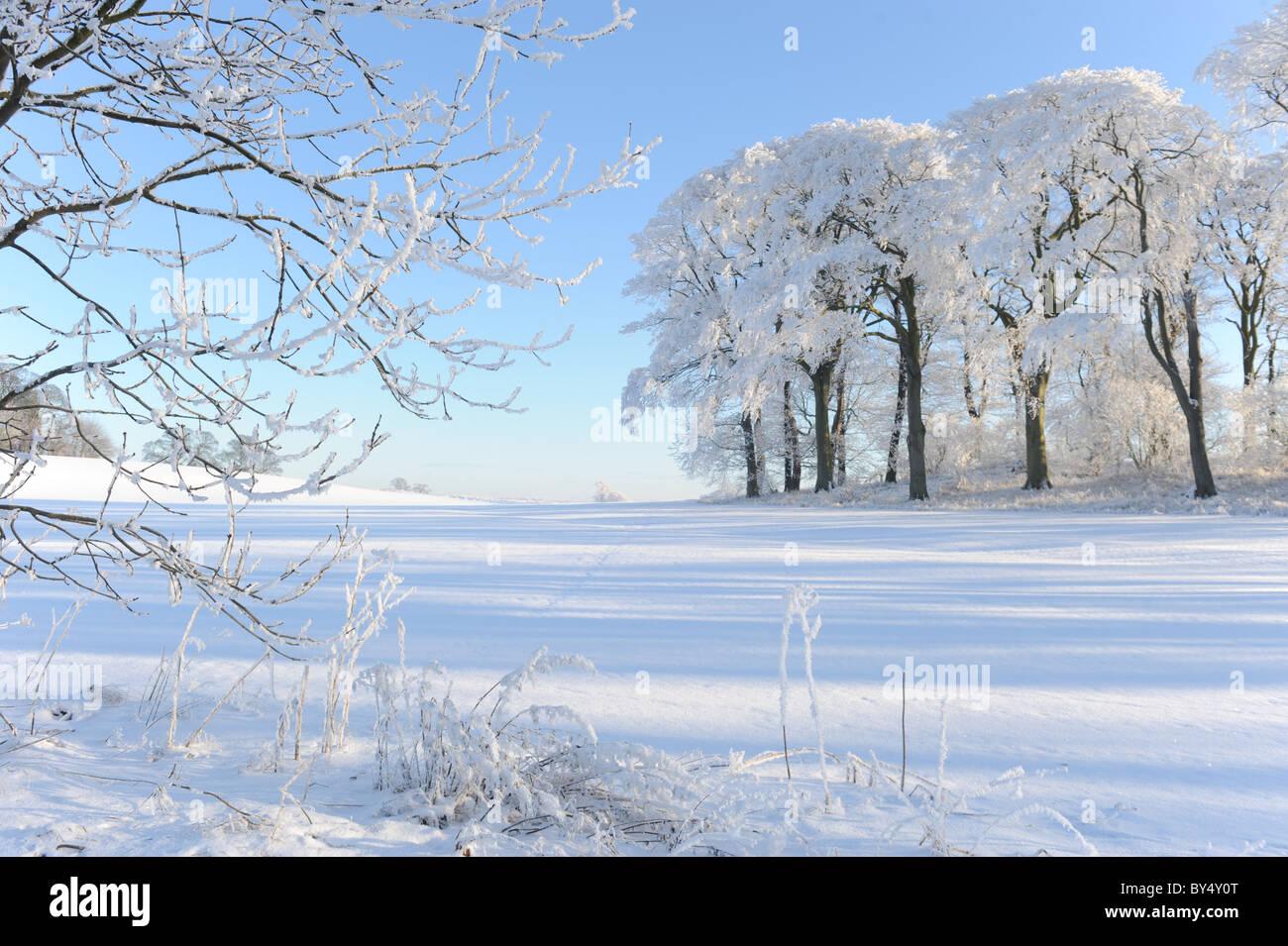 Frosty matin d'hiver enneigé Banque D'Images