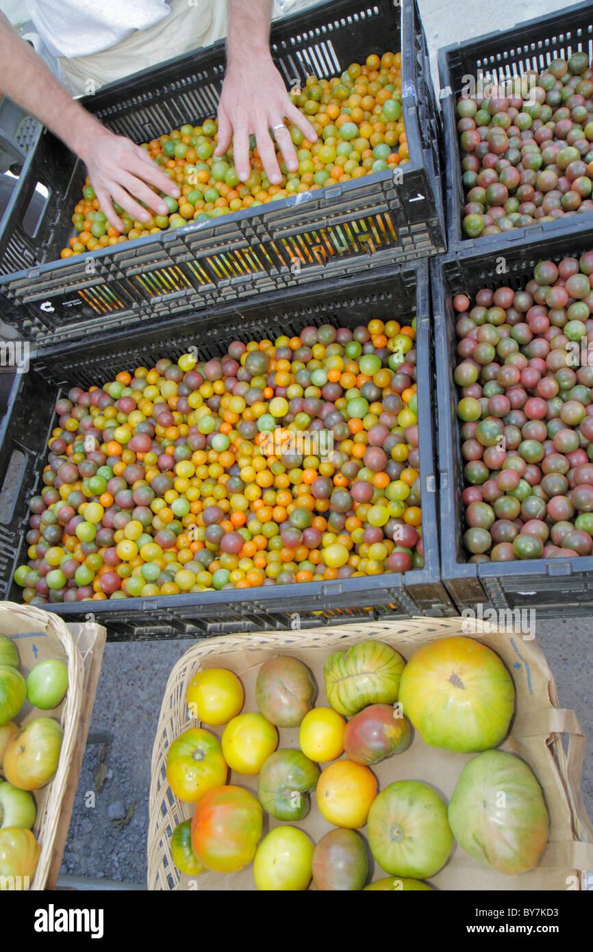 Tennessee Chattanooga Rue Principale marché agriculteurs saisonniers alimentaire durable produisent des légumes Photo Stock