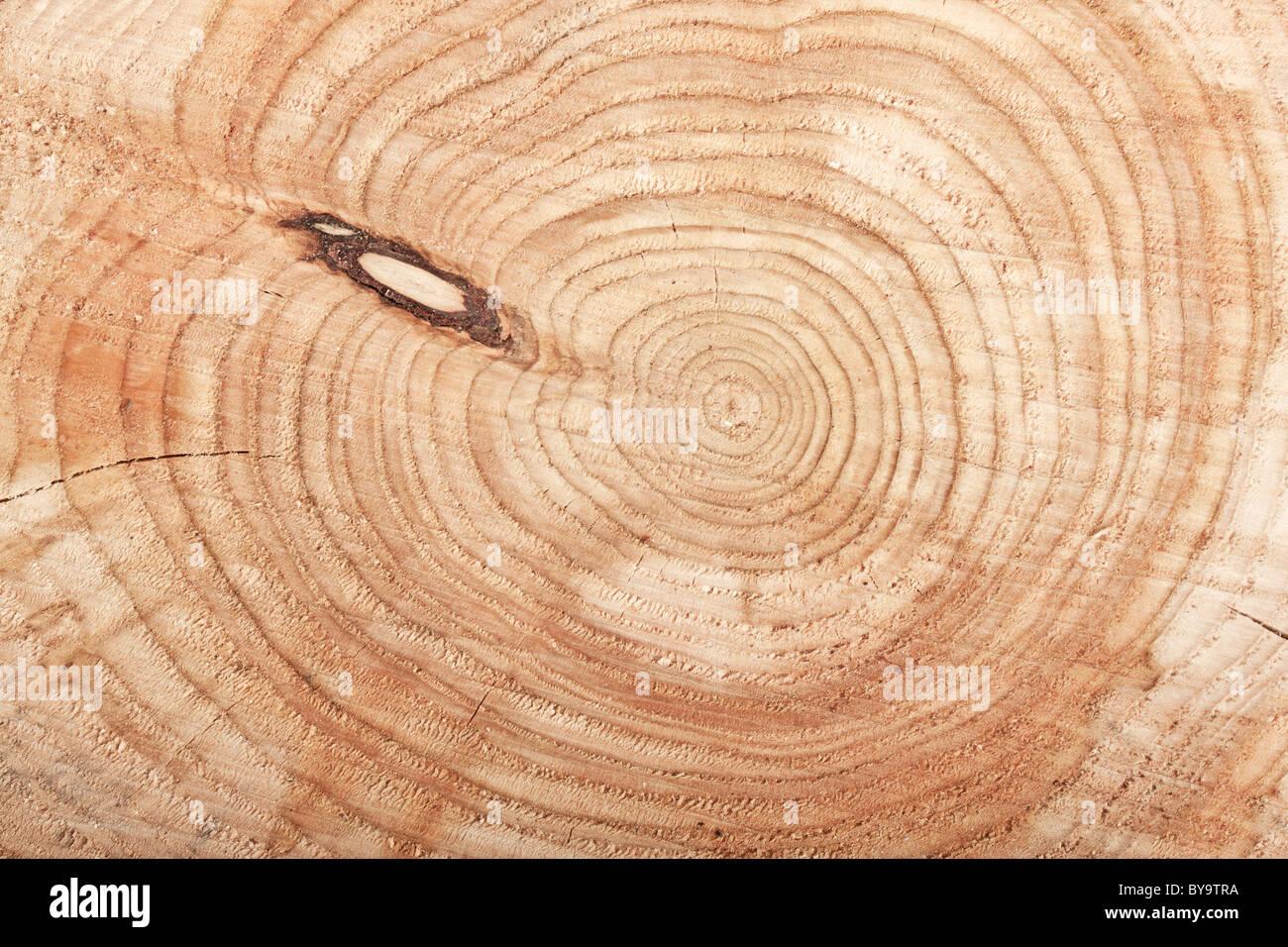 Top View Close-up de souche d'arbre coupé Photo Stock