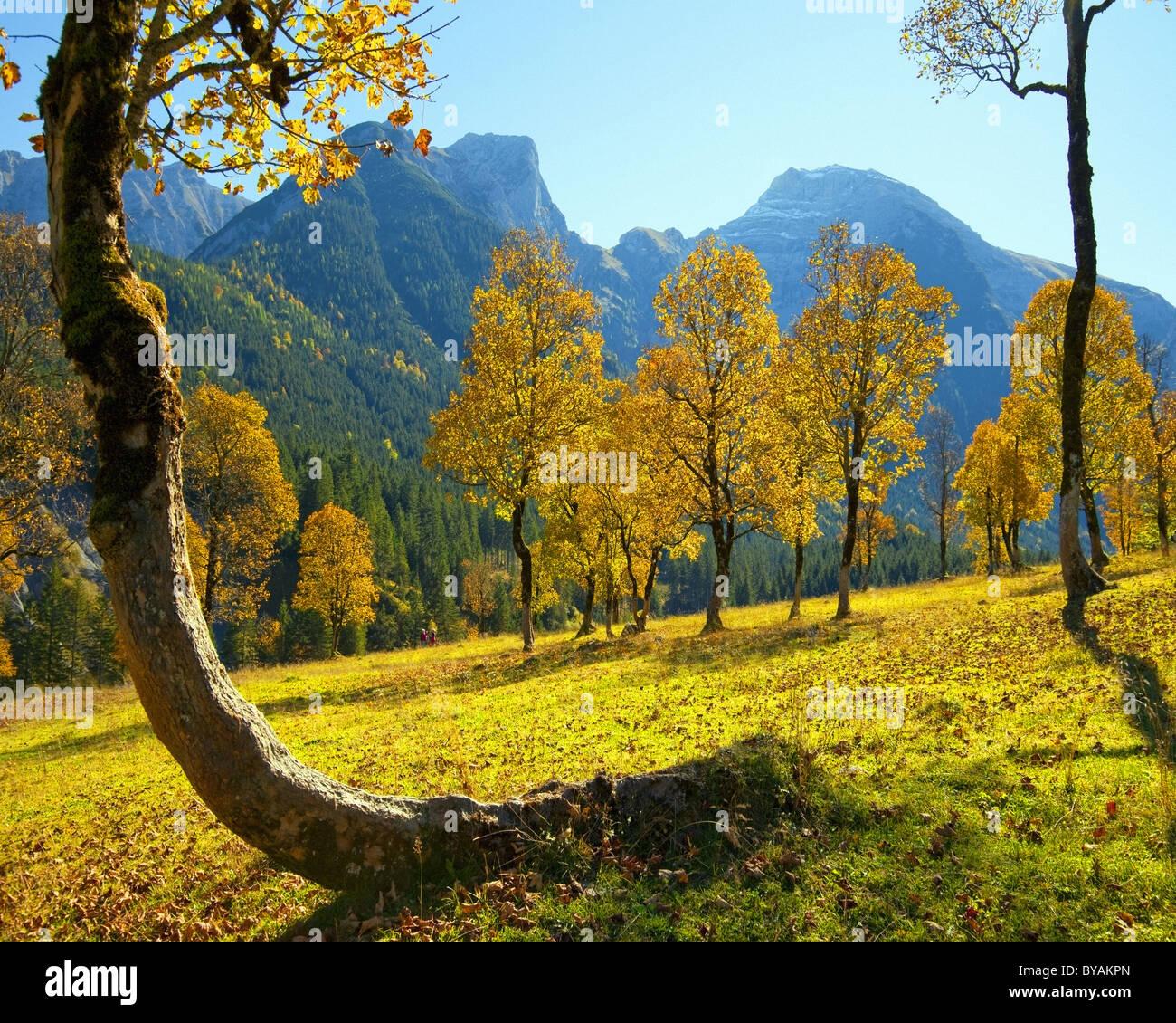 Au Tyrol: Grosser Ahornboden - Photo Stock