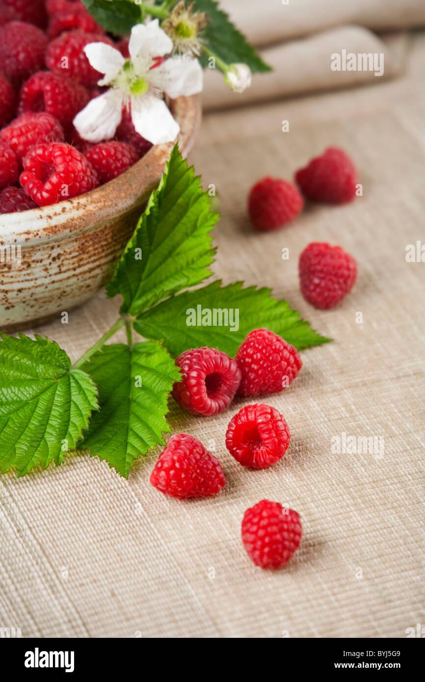 Agriculture - les framboises rouges dans un bol et sur un tapis de feuilles et une fleur. Photo Stock