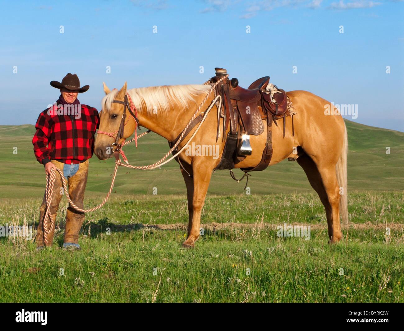 Élevage - un cowboy pose avec son cheval sur une prairie verte / de l'Alberta, au Canada. Banque D'Images