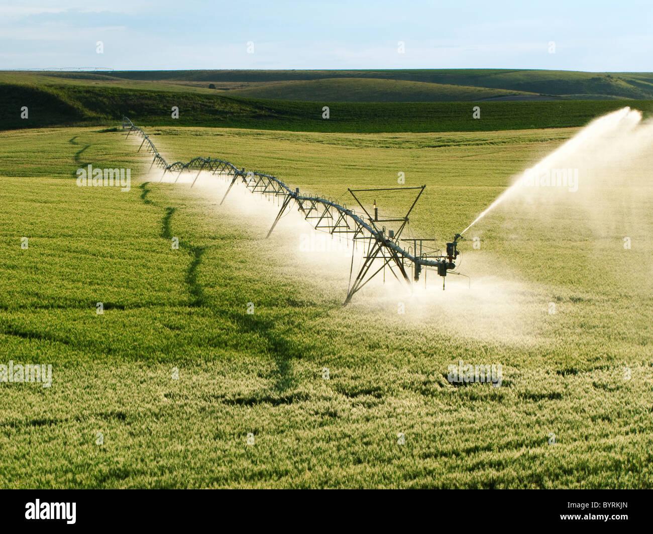 Agriculture - Centre d'exploitation du système d'irrigation à pivot sur un champ de grain vert Photo Stock