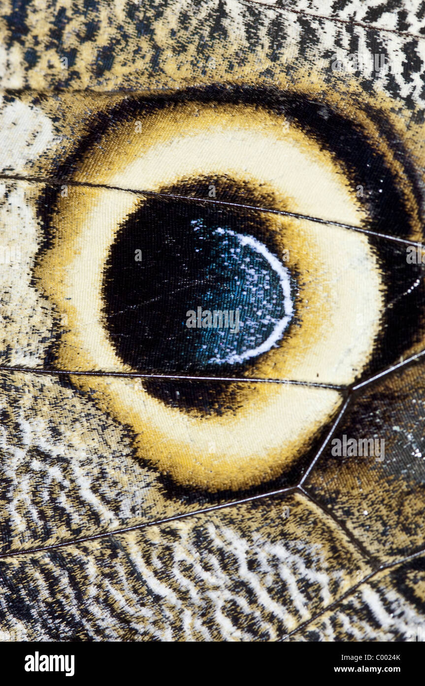 Papillons dans le bassin de l'Amazone, de l'Équateur. Photo Stock