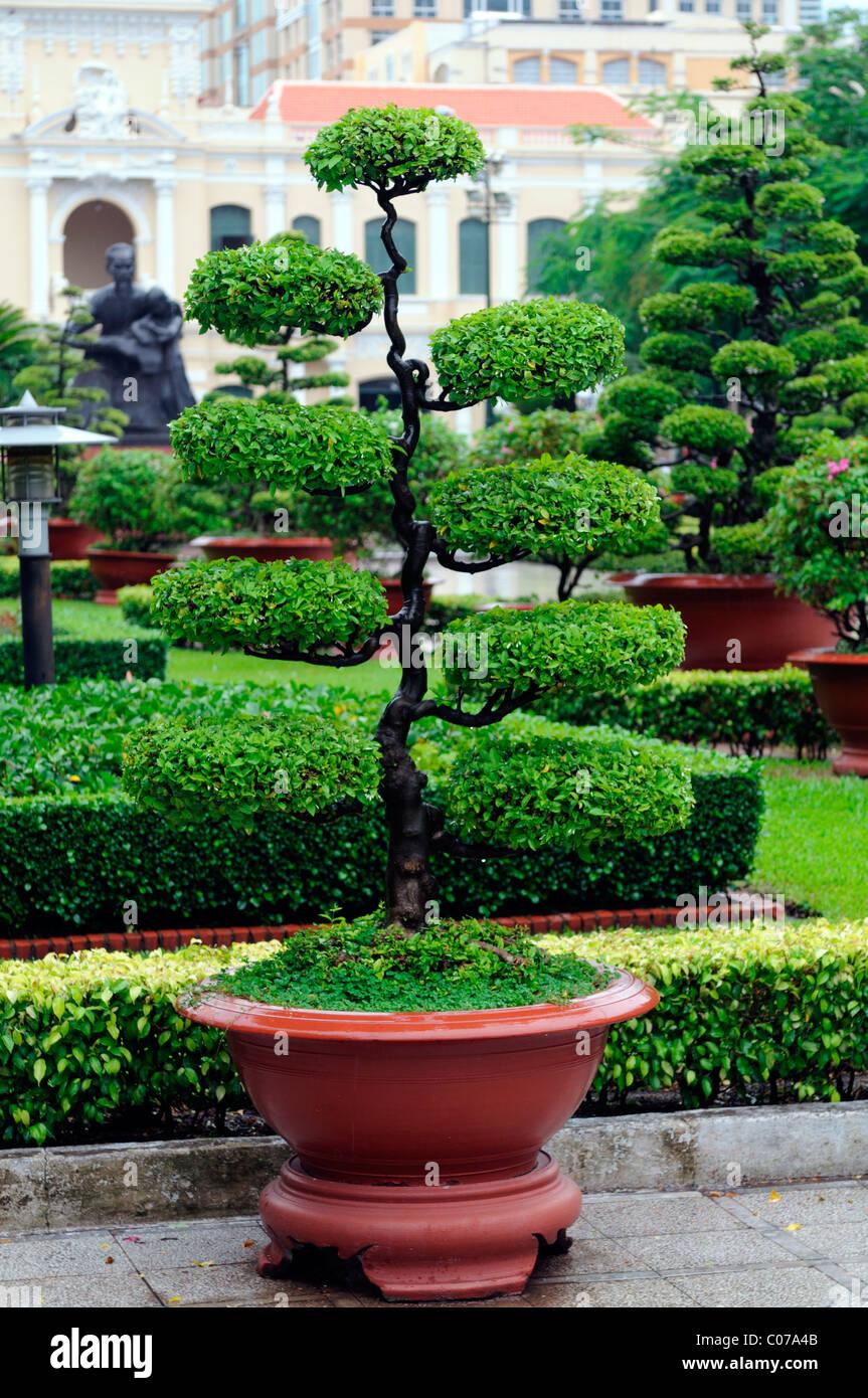 Bonsai arbre en pot pot vietnam vietnamien sculpté design jardin ...