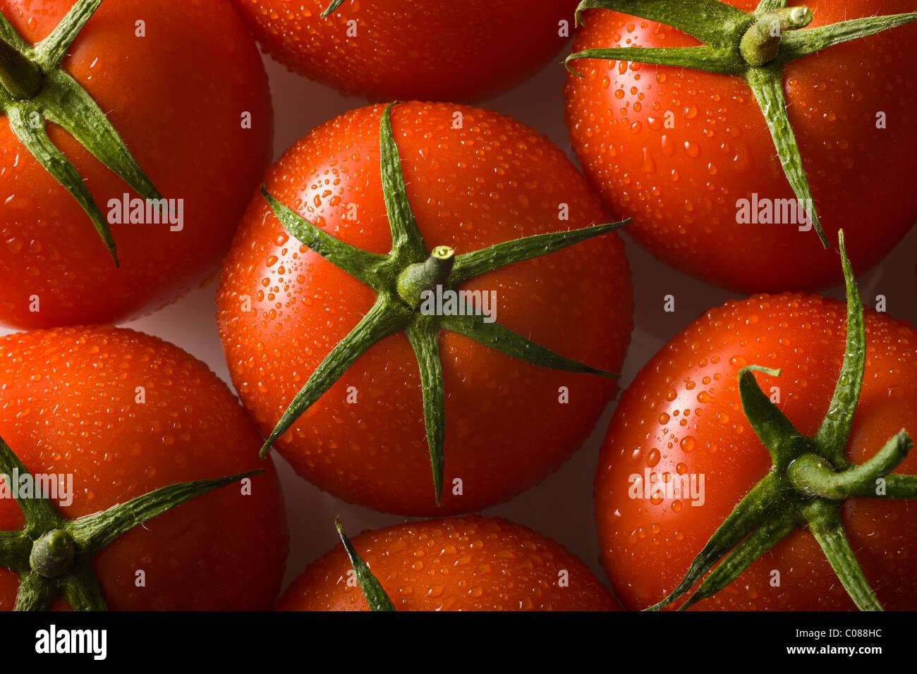 Tomates fraîches sur fond blanc Photo Stock