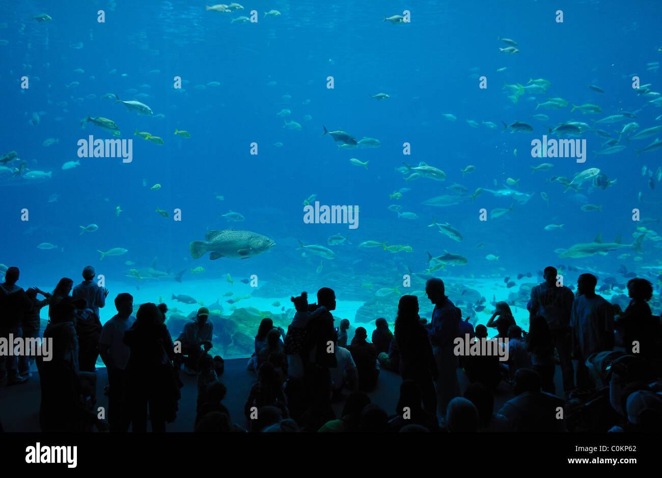 L'Aquarium de Géorgie, le plus grand aquarium du monde, à Atlanta, Géorgie Photo Stock