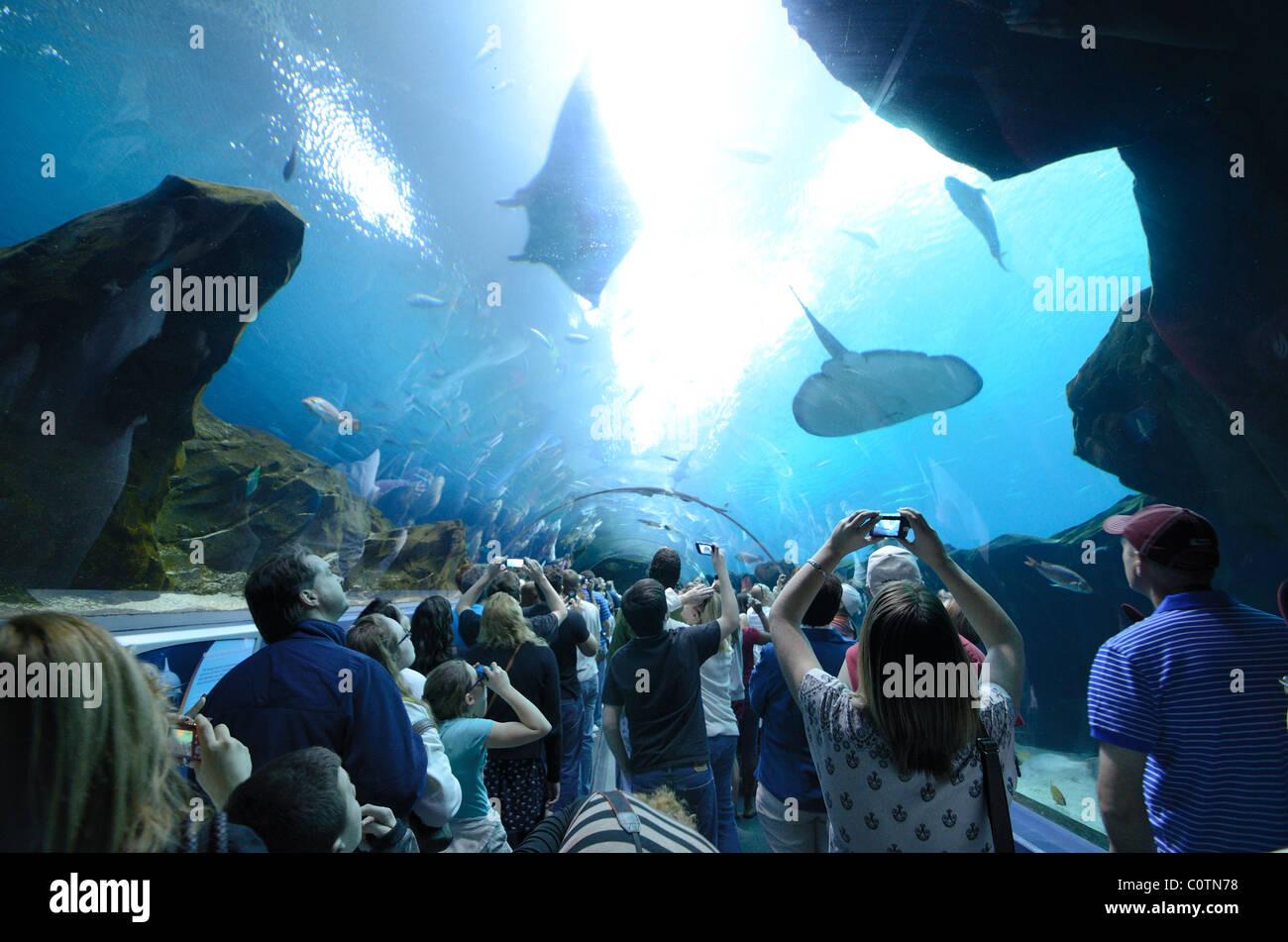 L'Aquarium de Géorgie, le plus grand aquarium du monde, à Atlanta, Géorgie. Le 20 février Photo Stock