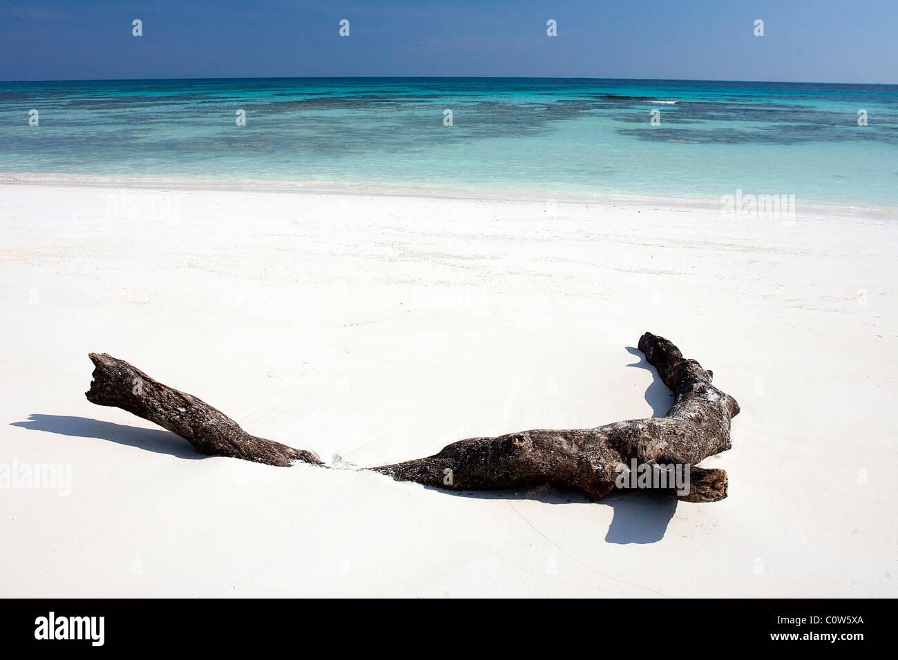 Un morceau de bois flotté réside dans le sable blanc d'une plage de sable tropicale dans le Simialan îles au large Banque D'Images