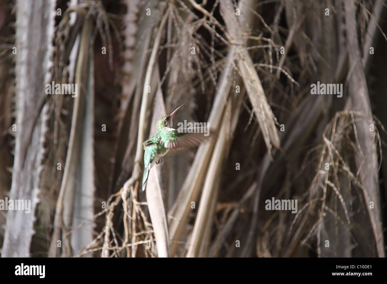 Bird, oiseau de ronflement Photo Stock