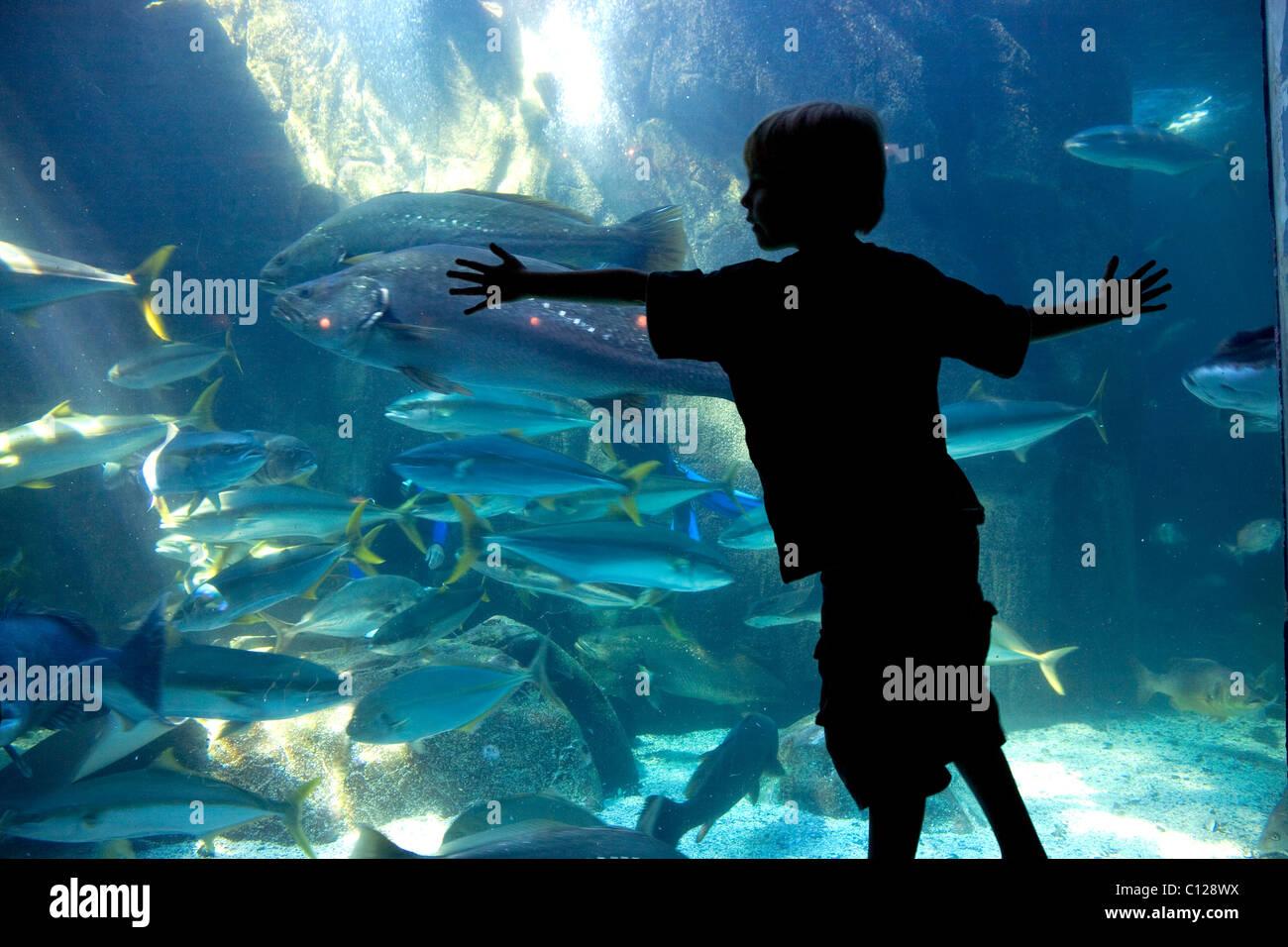 L'Aquarium des deux océans, les visiteurs, les poissons, Victoria & Alfred Waterfront, Cape Town, Western Photo Stock