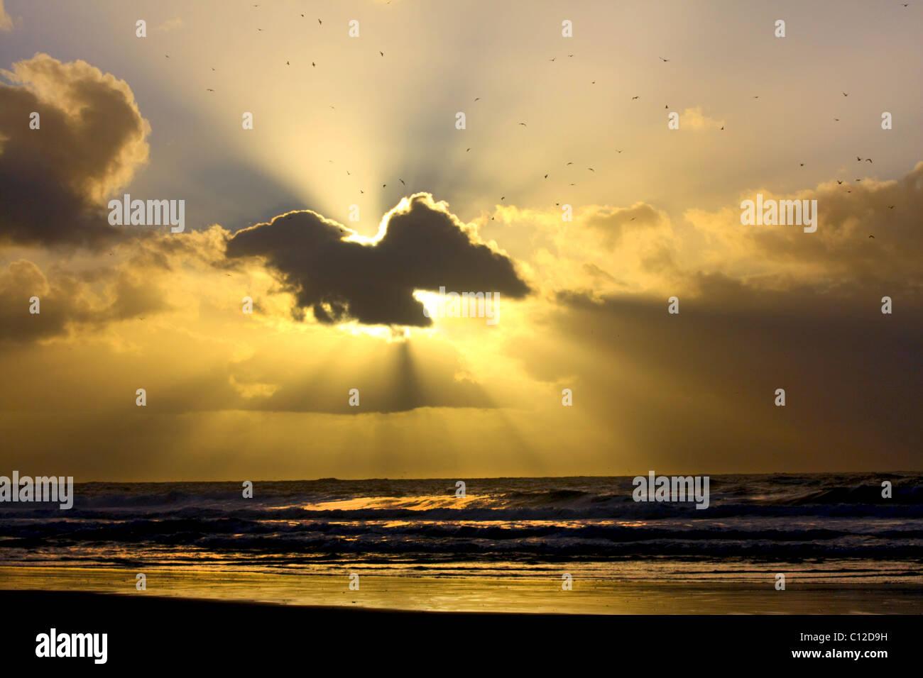 Un 40,151.06068rayons de soleil Rayons de mouettes mouettes oiseaux sombres nuages les couches de nuages reflet Photo Stock