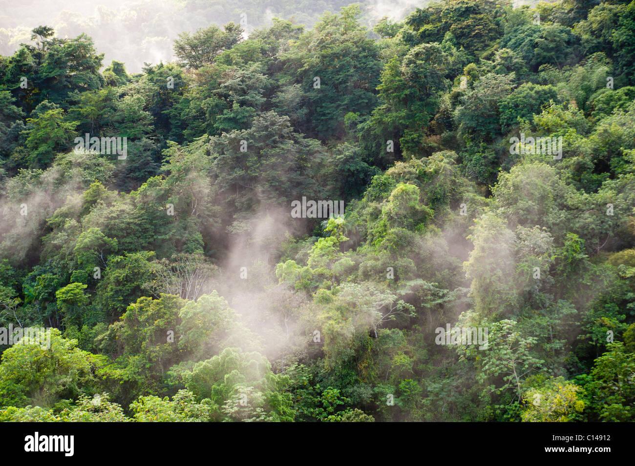 Forêt amazonienne, jungle, brume, tree tops, Banque D'Images