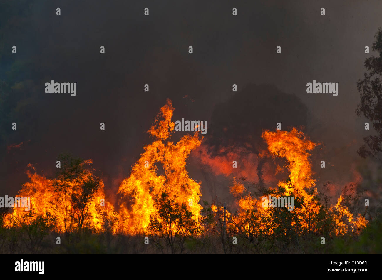 Feu de brousse dans le Queensland Austtralia Photo Stock