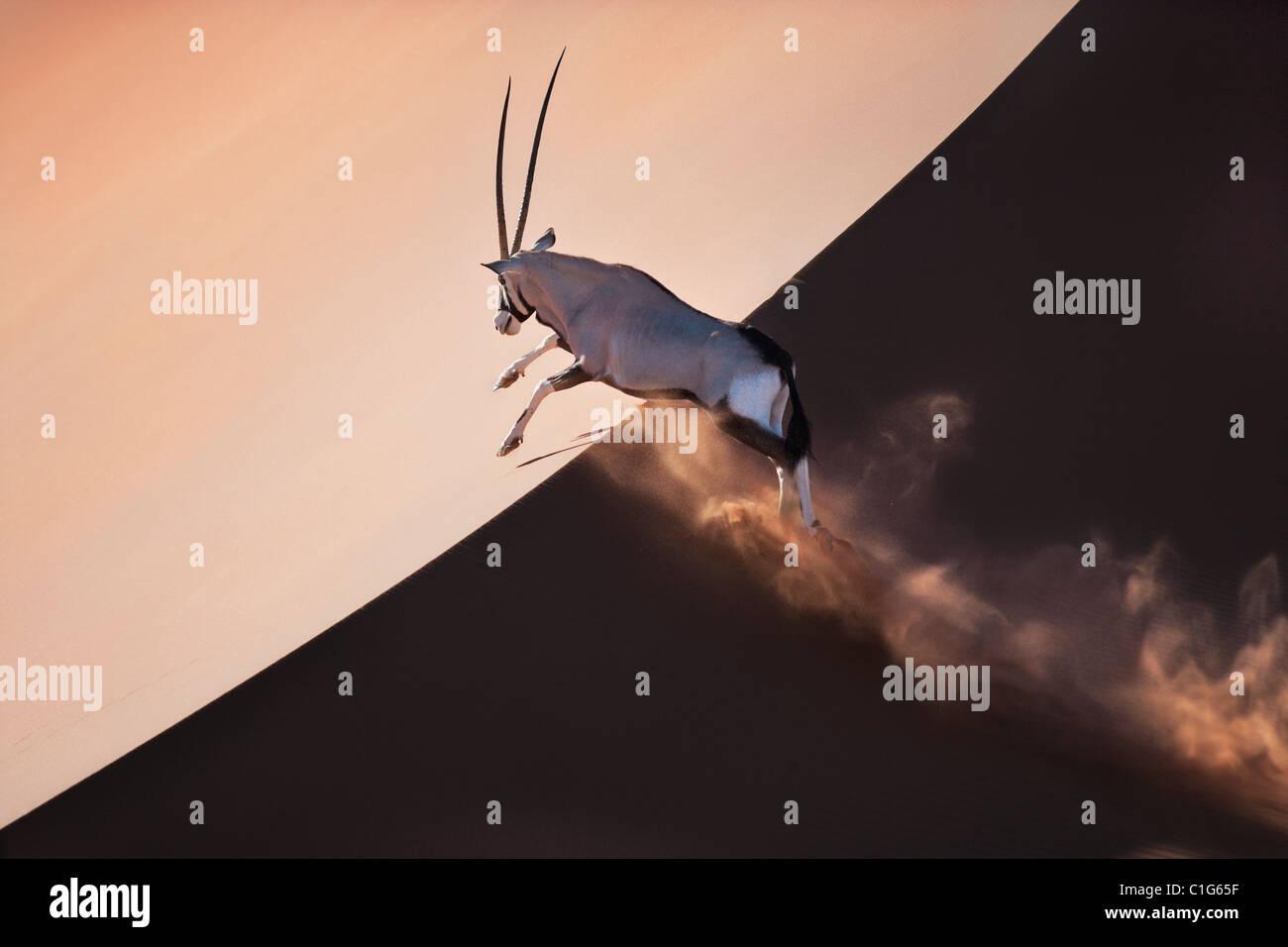 Gemsbok (Oryx gazella) dans le désert namibien typique de l'habitat des dunes de sable du désert Photo Stock
