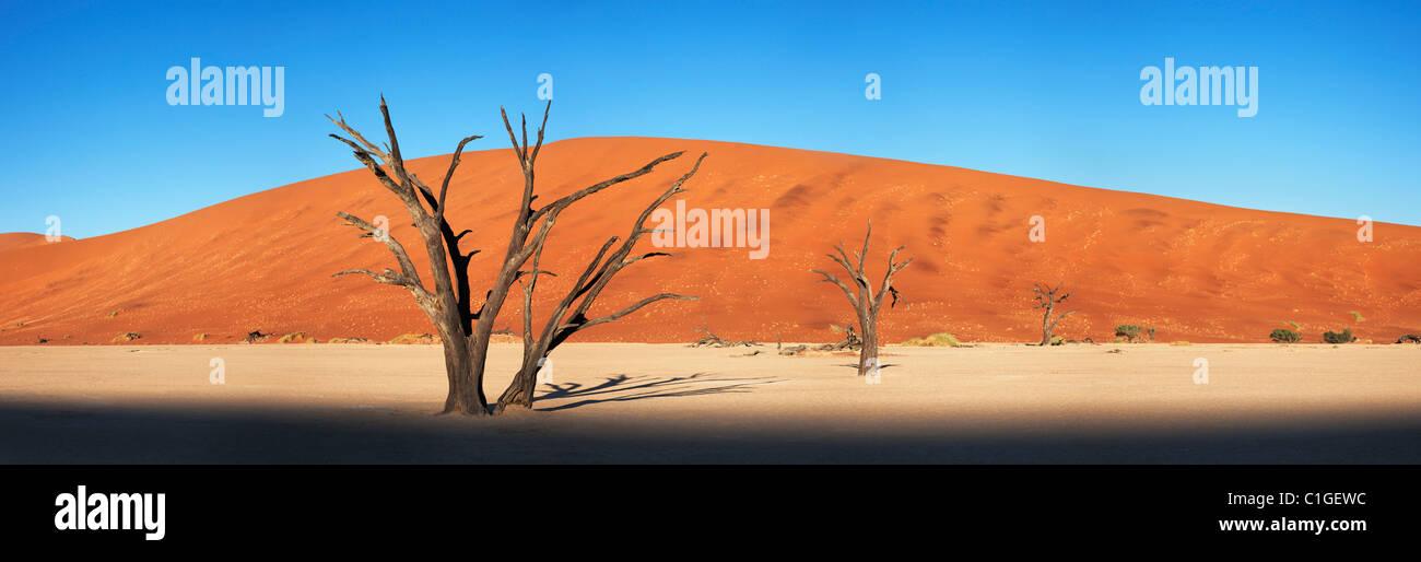 Vue panoramique d'un dead Acacia Sossusvlei dans le désert du Namib. Namib-Naukluft N.P, Namibie Photo Stock