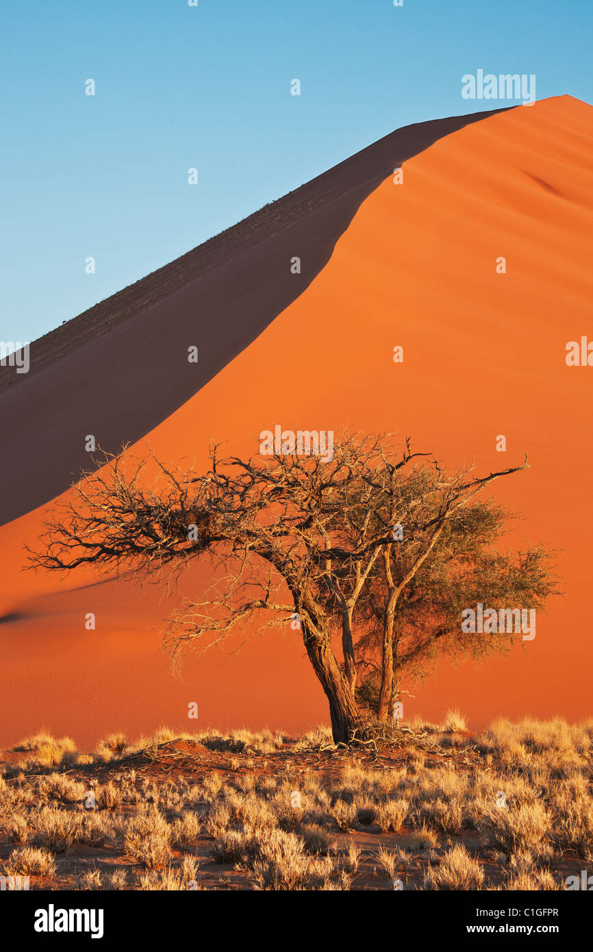 Voir d'Acacia et de dunes de sable rouge de Sossusvlei dans le désert du Namib. Namib-Naukluft N.P, la Photo Stock