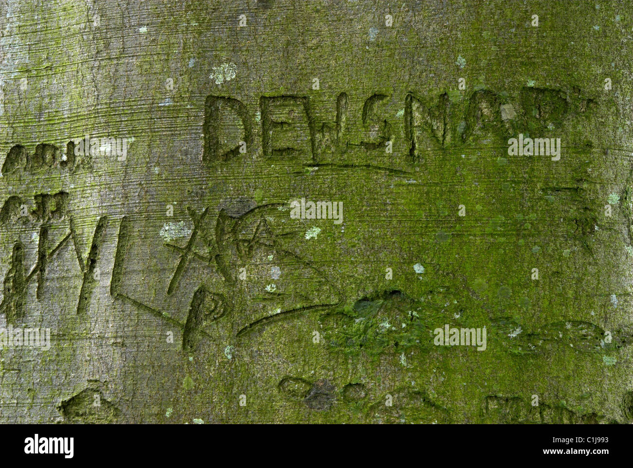 Graffiti sur un beech tree trunk photographié le 10 mai 2008, le hêtre avenue, près de Badbury Rings Photo Stock