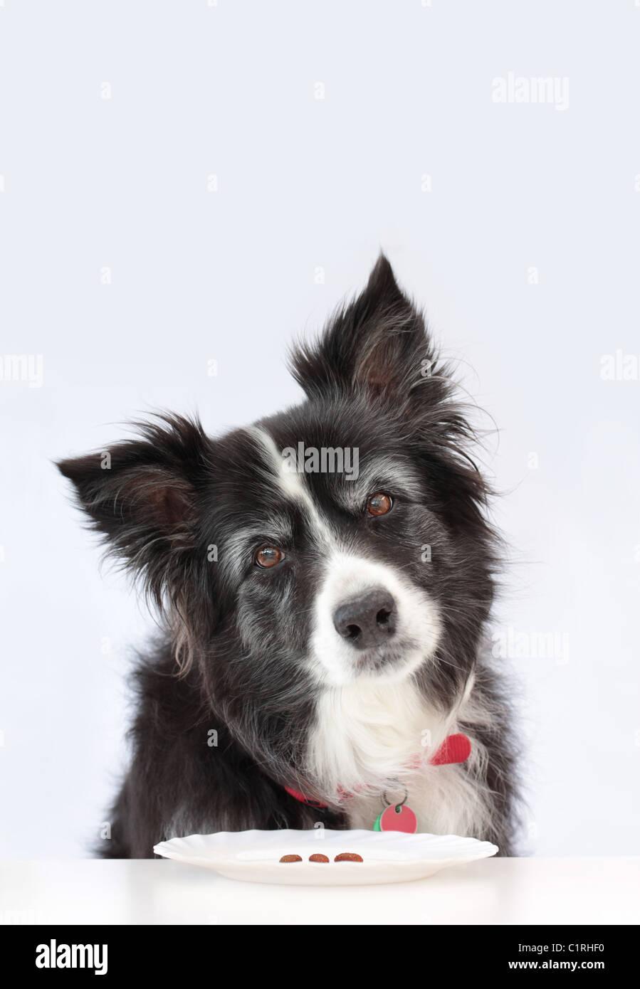 Est-ce que votre chien besoin d'aller à un régime Photo Stock