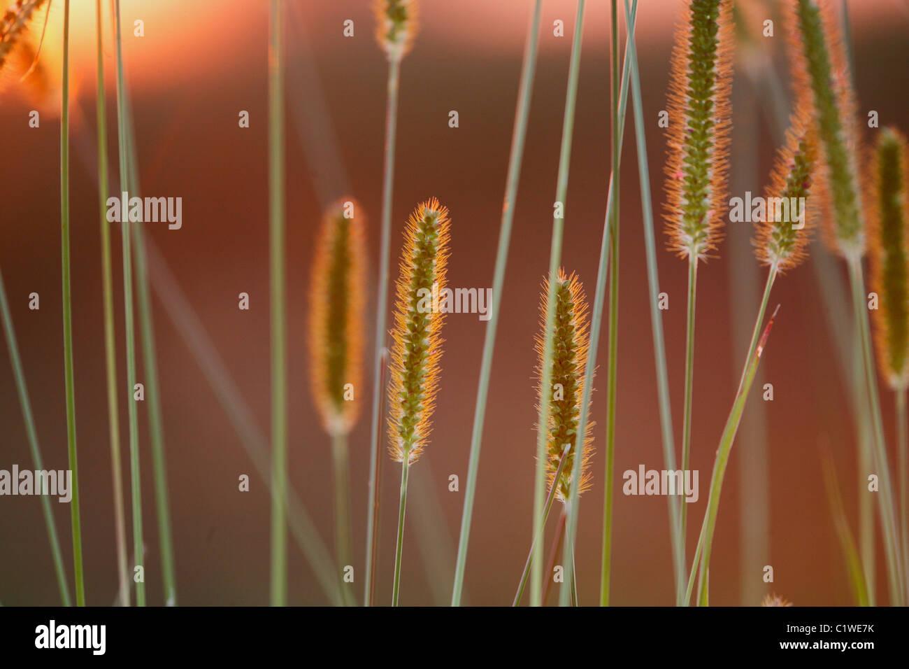 L'herbe au printemps Banque D'Images