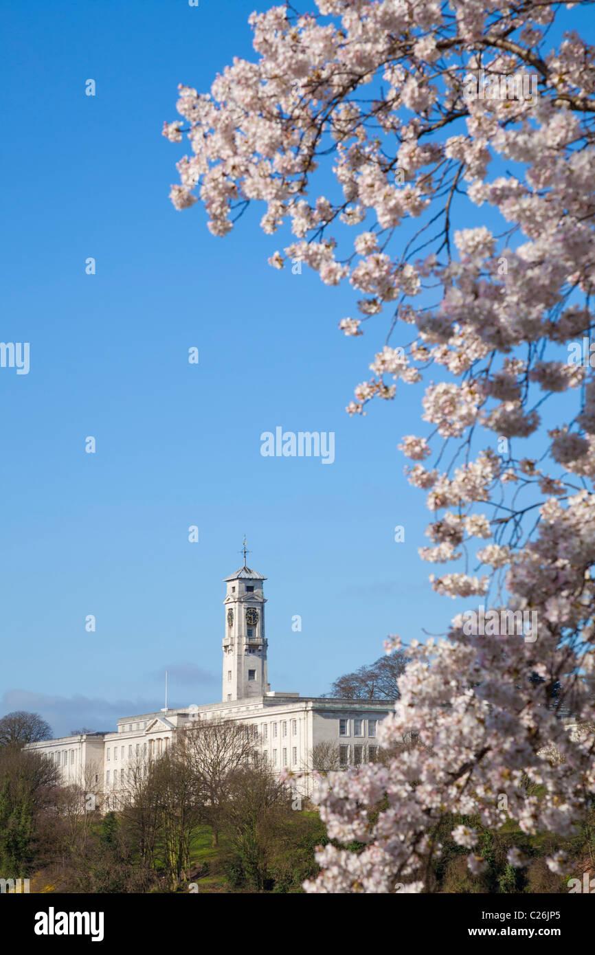 Fleur de cerisier sur les arbres dans le parc de l'Université de Nottingham Nottingham Nottinghamshire Photo Stock