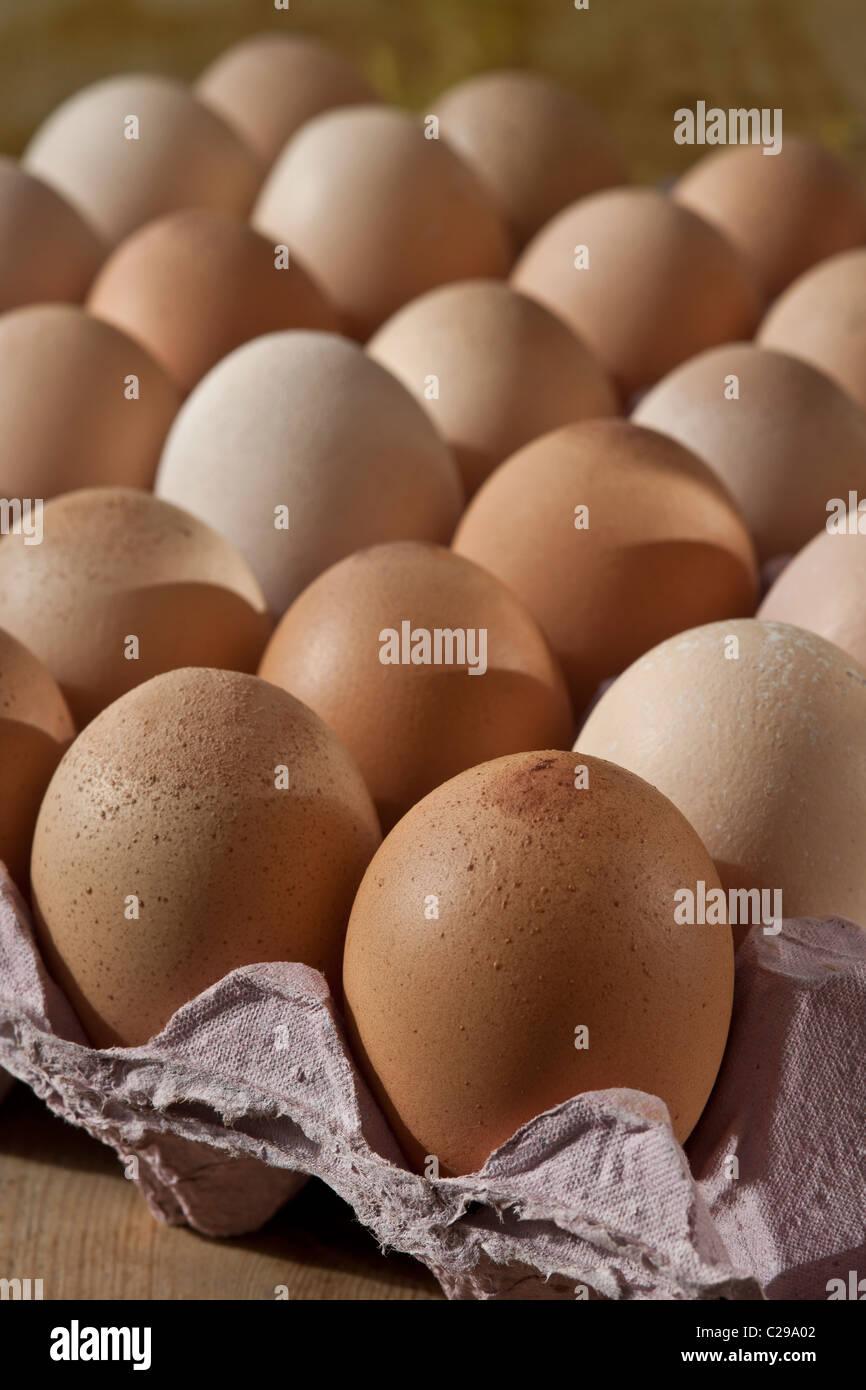 Les oeufs de poulet fermier bac animal rescue center brun blanc frais mixtes prévues produits sains Photo Stock