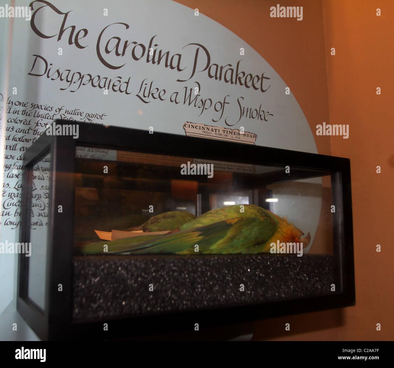 Conure de Caroline afficher Zoo de Cincinnati disparue Banque D'Images