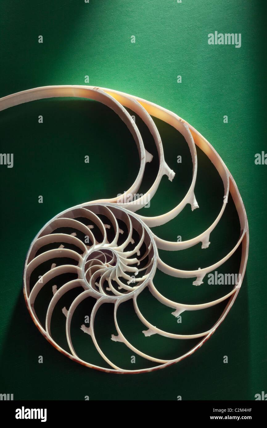La section de crustacés représentant l'évolution, la croissance et le changement sur un fond Photo Stock