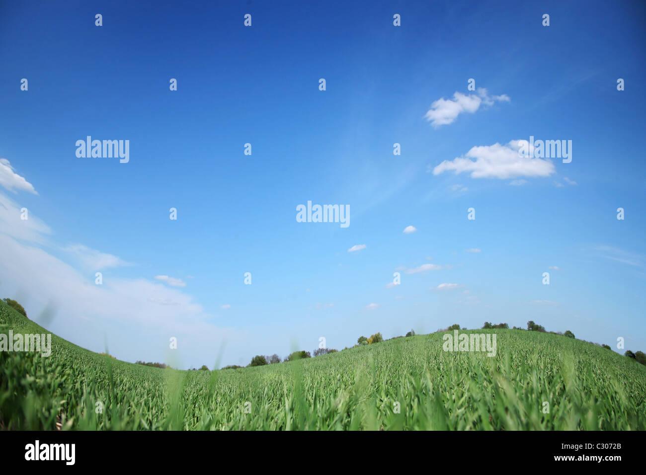 Champ vert et bly ciel sans nuages. Photo Stock