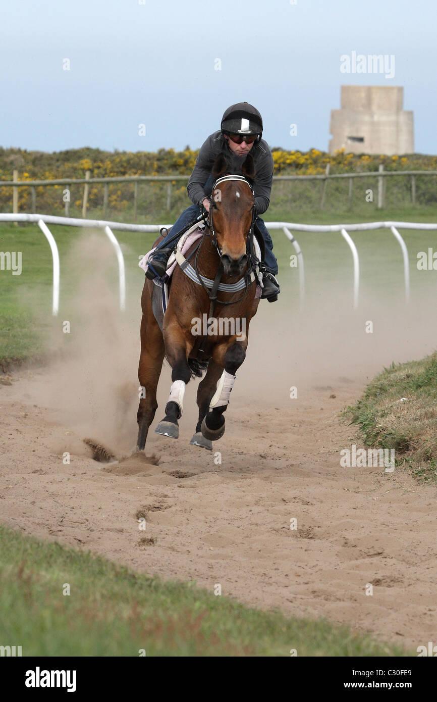 Cheval de course exerçant les Landes Jersey Channel Islands Photo Stock