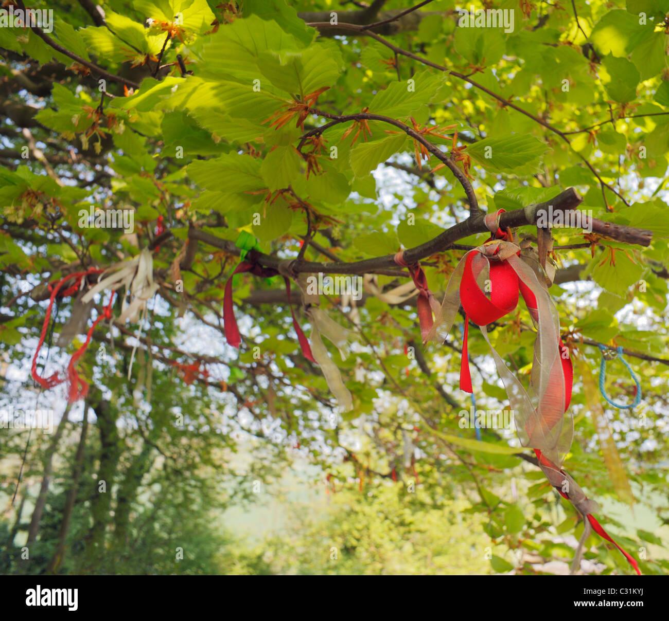 Rubans souhaite attaché à un arbre dans un ancien site d'enfouissement, à Coldrum Stones. Banque D'Images