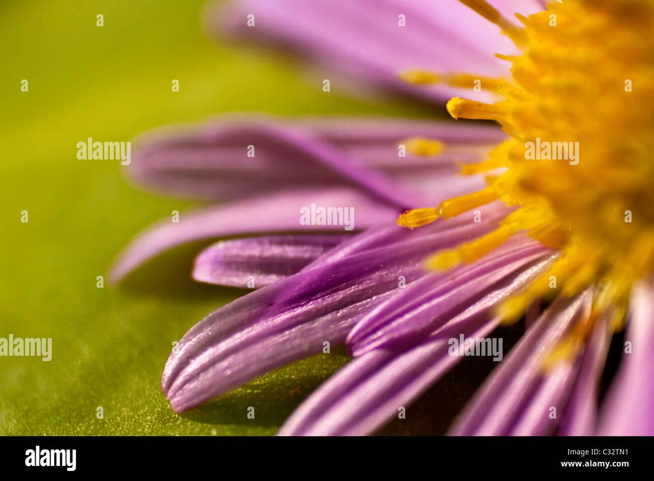 Photo macro d'une fleur Banque D'Images