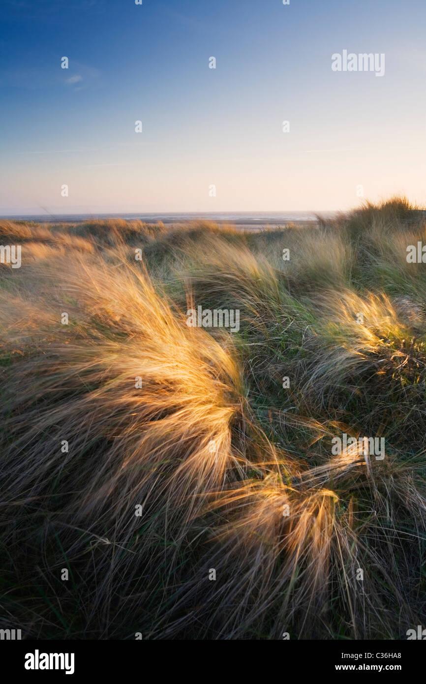 Berrow Dunes. Le Somerset. L'Angleterre. UK. Photo Stock