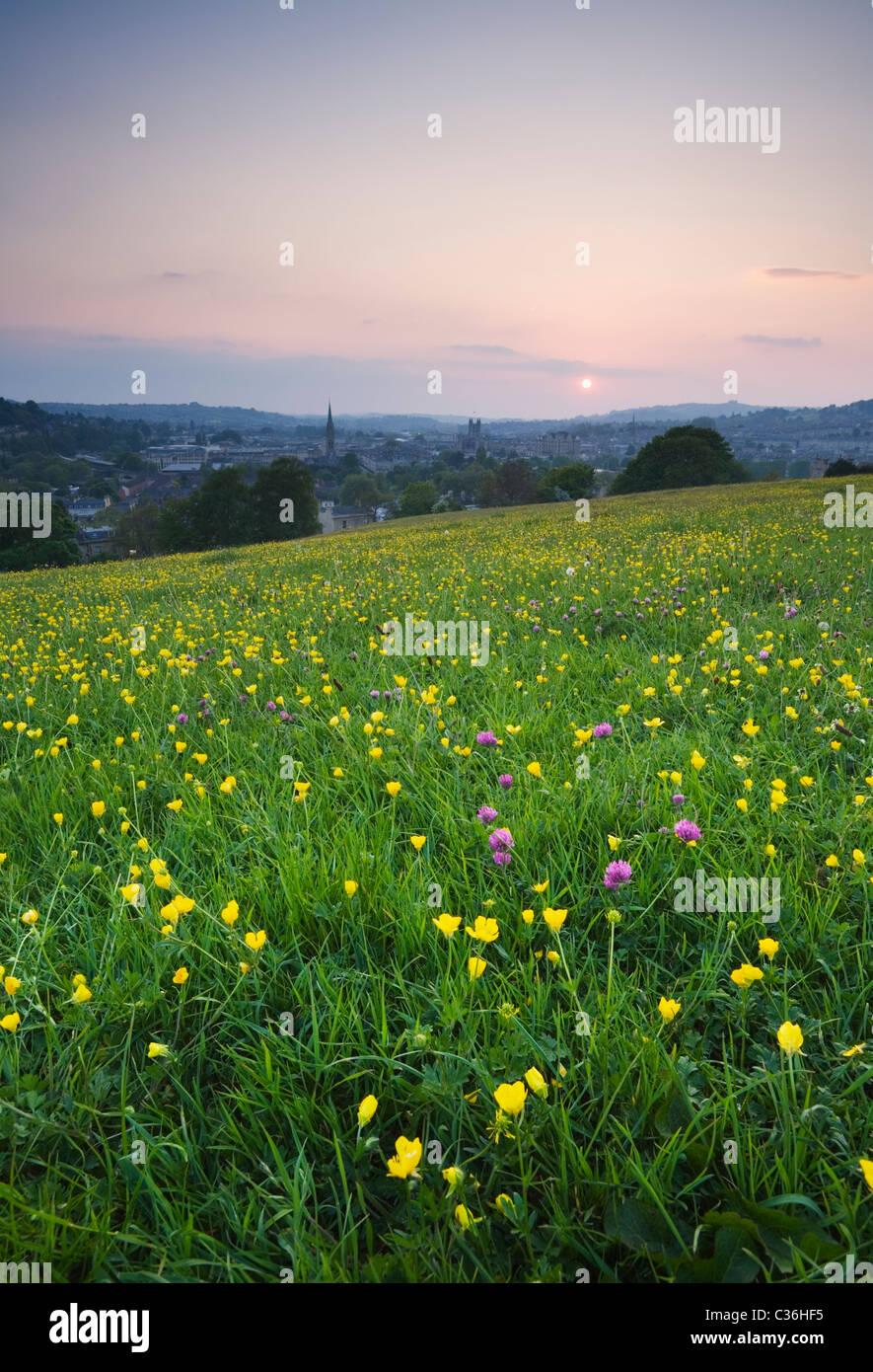 Fleurs sauvages sur Bathwick Hill au printemps avec baignoire dans la distance. Baignoire. Le Somerset. L'Angleterre. Photo Stock