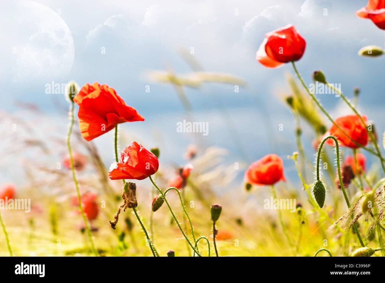 Fleurs sur fond coloré - macro photo Photo Stock
