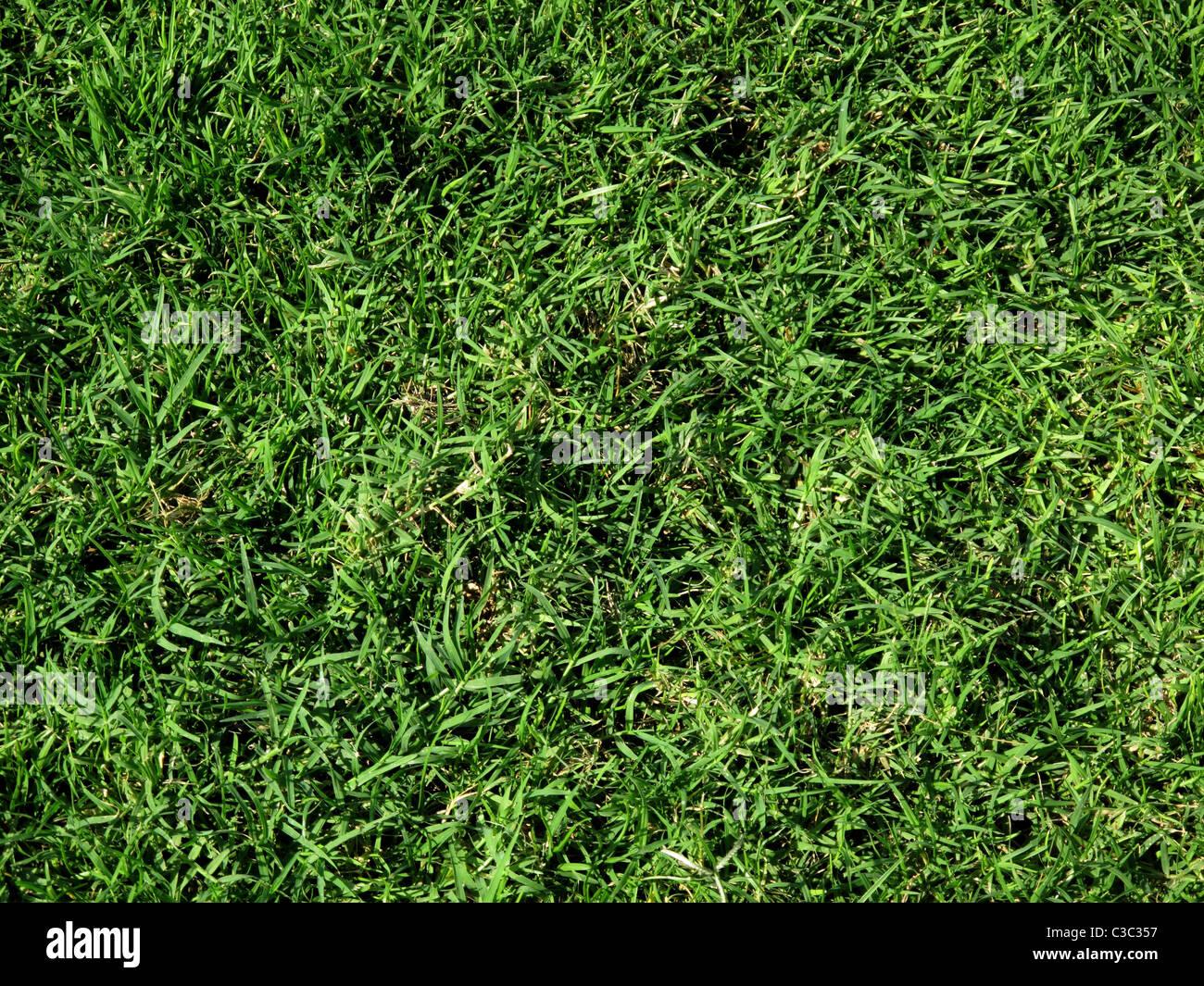 Bermuda Grass lawn (Cynodon dactylon), DUBAÏ, ÉMIRATS ARABES UNIS Photo Stock