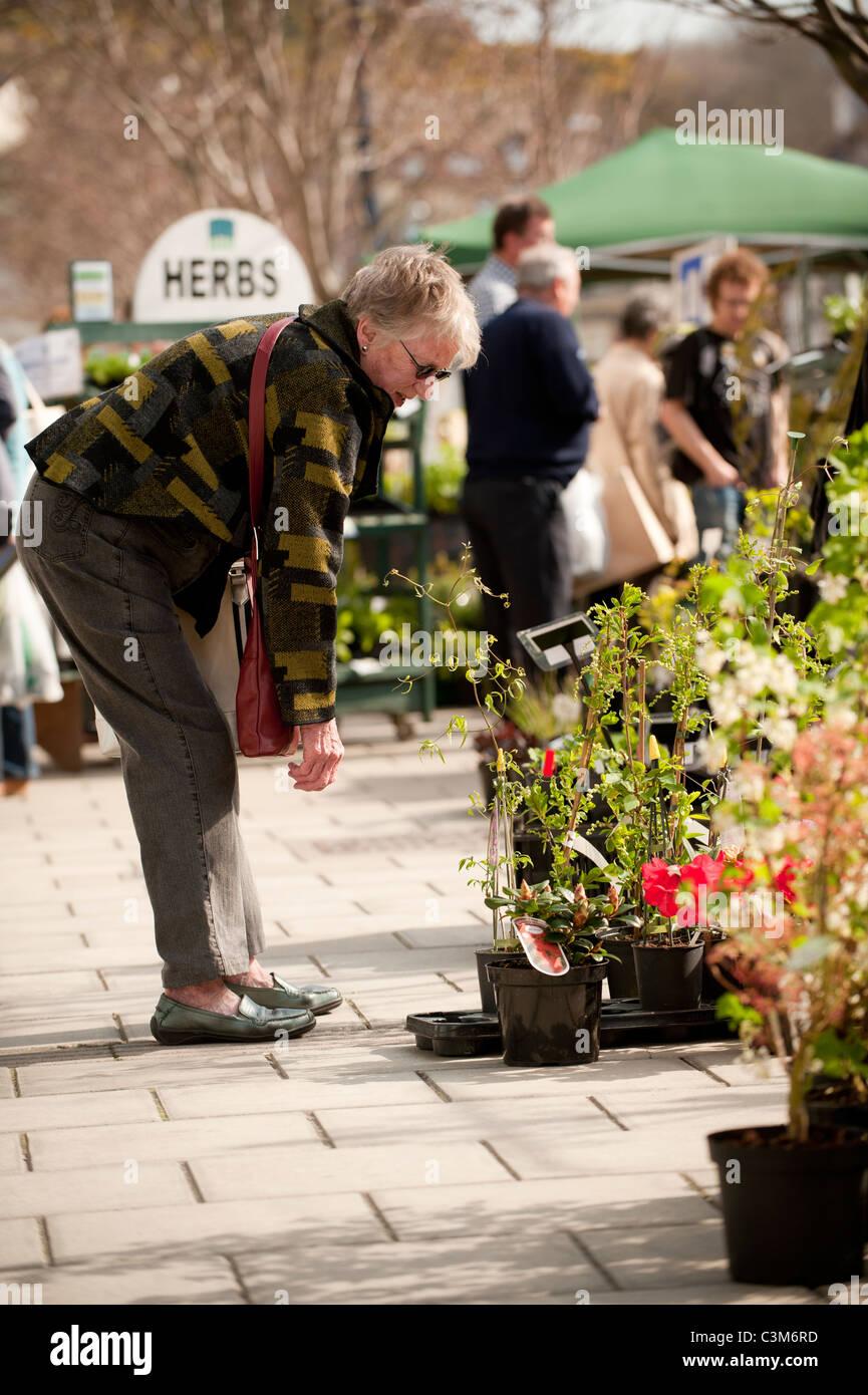 Matin de printemps - les gens d'acheter des fleurs et plantes dans un marché de rue, Aberystwyth Wales Photo Stock