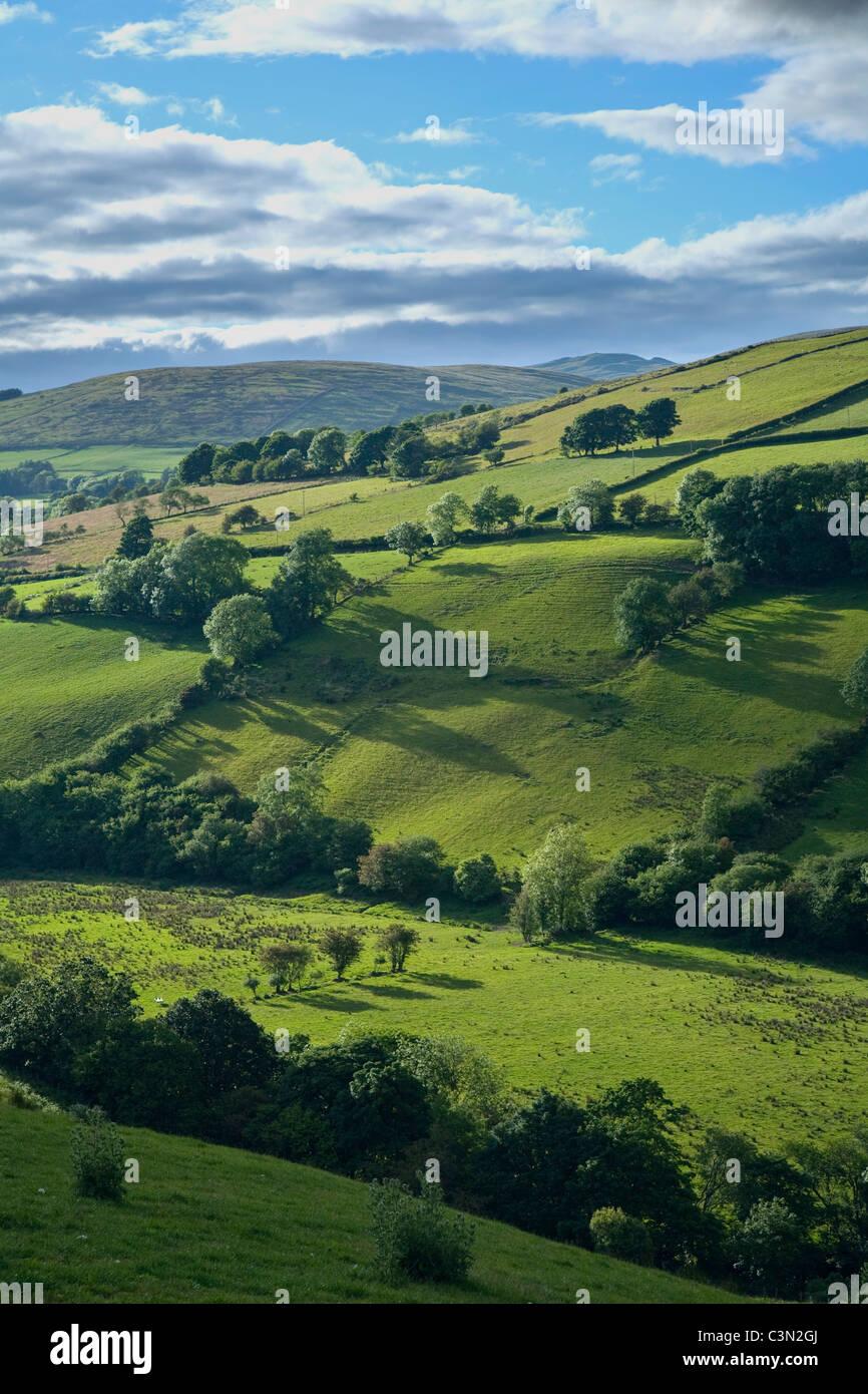 Champs d'été dans la vallée de montagnes Sperrin, Glenelly, comté Tyrone, Irlande du Nord. Photo Stock
